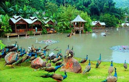Xishuangbanna Primitive Forest Park